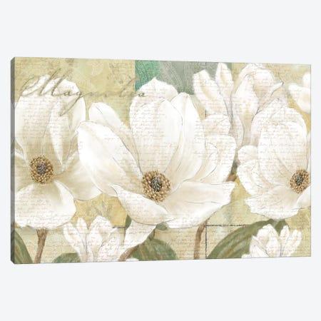 Magnolia Canvas Print #LWO3} by Linda Wood Canvas Art Print