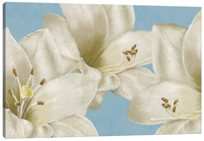 White Amaryllis III Canvas Art Print