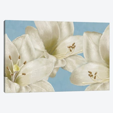 White Amaryllis III Canvas Print #LWO4} by Linda Wood Canvas Art