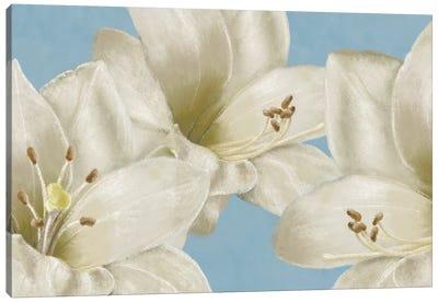 White Amaryllis III Canvas Art Print