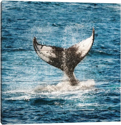 Tails Of The Whale Canvas Art Print