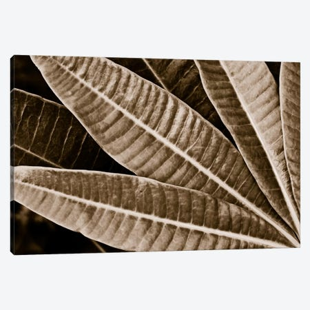 Modern Art - Sepia Leaves Canvas Print #MA406} by 5by5collective Canvas Art