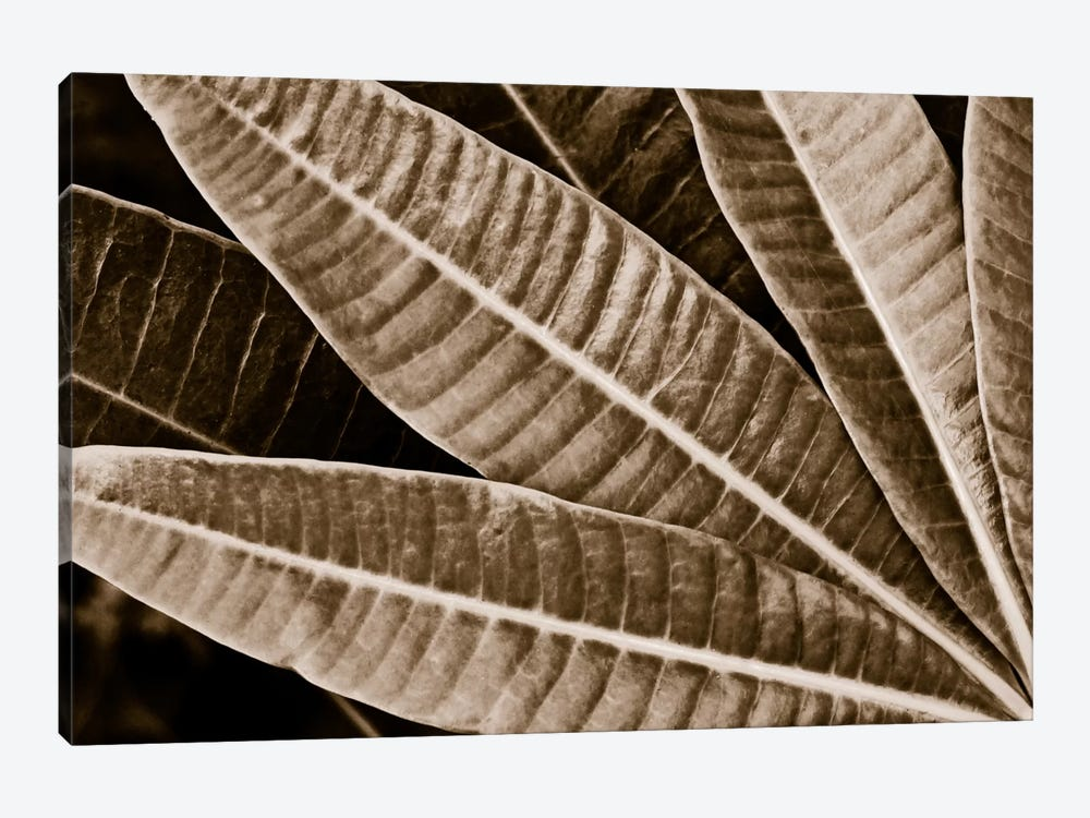 Modern Art - Sepia Leaves by 5by5collective 1-piece Canvas Wall Art