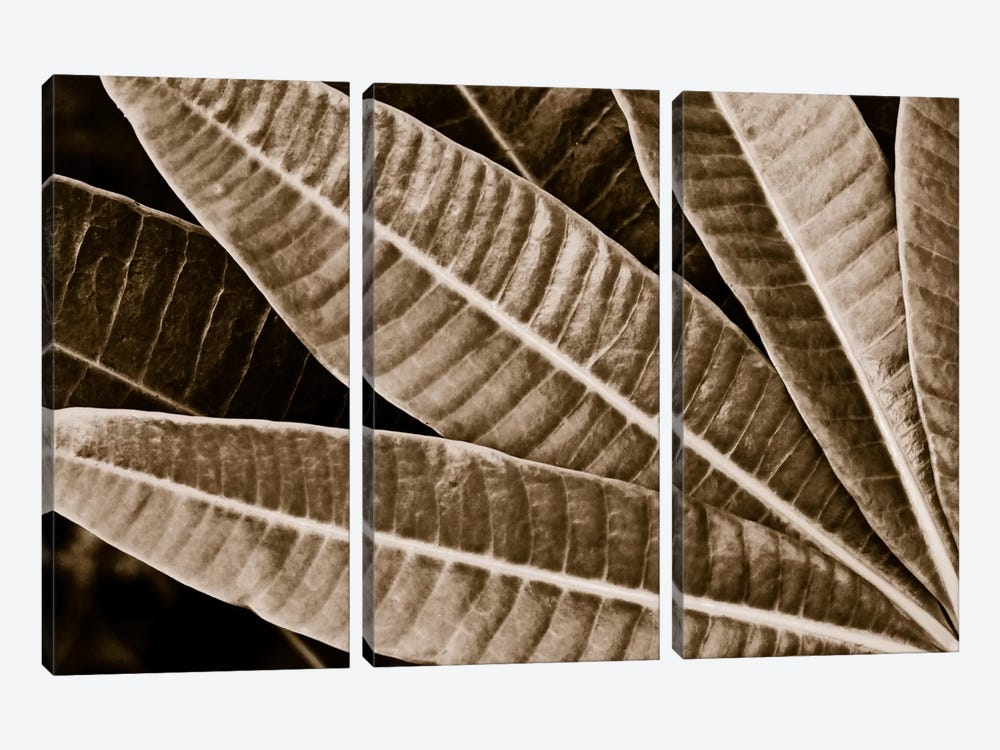 Modern Art - Sepia Leaves by 5by5collective 3-piece Canvas Artwork