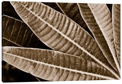 Modern Art - Sepia Leaves Canvas Art Print