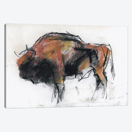 Zubr, Bialowieza Forest Canvas Print #MAD102} by Mark Adlington Canvas Print