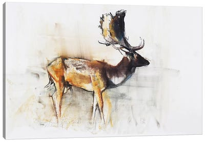 Magnificent Fallow Buck Canvas Art Print