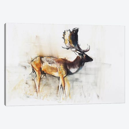 Magnificent Fallow Buck 3-Piece Canvas #MAD11} by Mark Adlington Canvas Wall Art