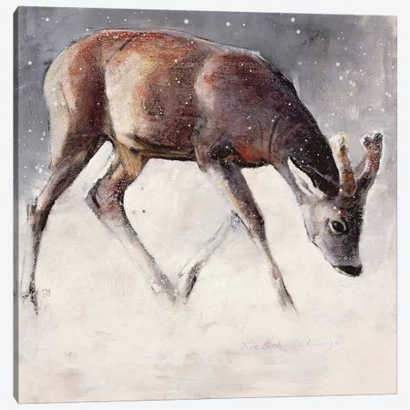 Roe Buck Canvas Print #MAD20} by Mark Adlington Canvas Art Print