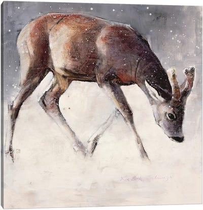 Roe Buck Canvas Art Print