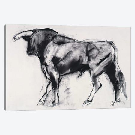 Toro Azul Canvas Print #MAD29} by Mark Adlington Art Print