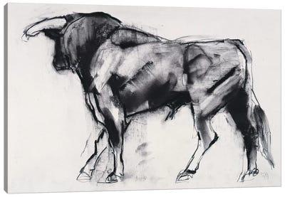 Toro Azul, Study Canvas Art Print