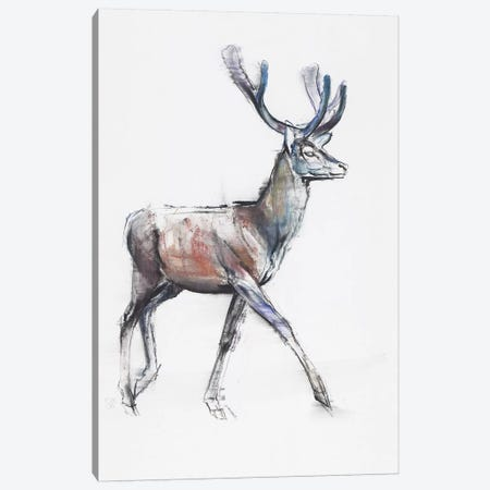 Velvet Canvas Print #MAD34} by Mark Adlington Canvas Art Print
