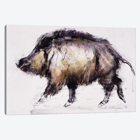 Wild Boar Canvas Print #MAD35} by Mark Adlington Canvas Art Print