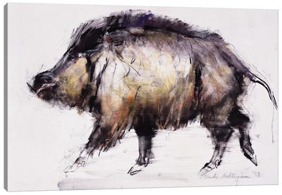Wild Boar Canvas Art Print