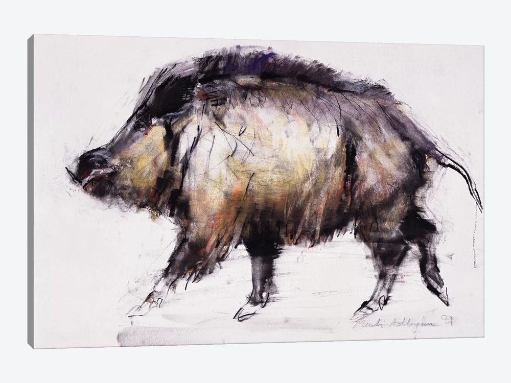 Wild Boar by Mark Adlington 1-piece Canvas Artwork
