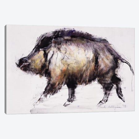 Wild Boar Canvas Print #MAD35} by Mark Adlington Canvas Art Print