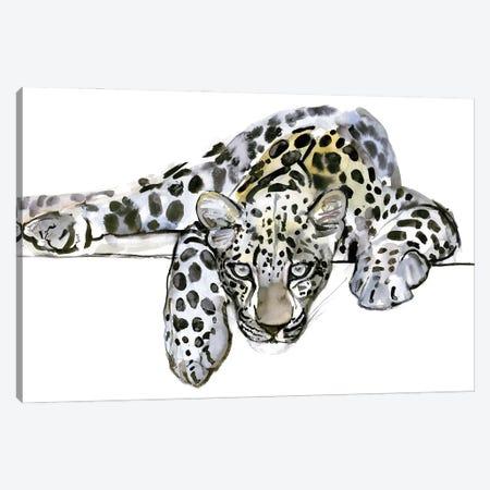 Arabian Leopard VI, 2008 Canvas Print #MAD57} by Mark Adlington Canvas Art Print