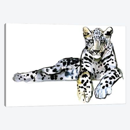 Arabian Leopard VII, 2008 Canvas Print #MAD58} by Mark Adlington Canvas Wall Art