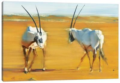 Circling Arabian Oryx, 2010 Canvas Art Print