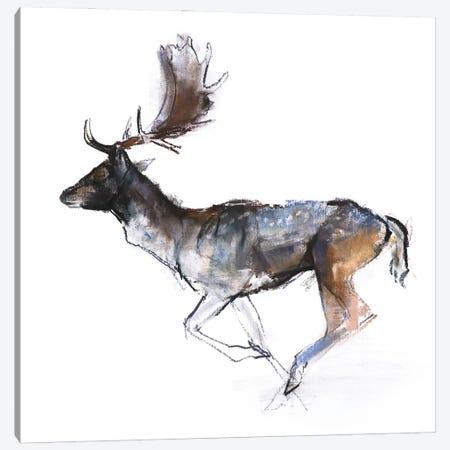 Evening Buck (Fallow Deer), 2007 Canvas Print #MAD72} by Mark Adlington Canvas Art
