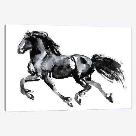 Flying Friesian, 2015 Canvas Print #MAD74} by Mark Adlington Canvas Art Print