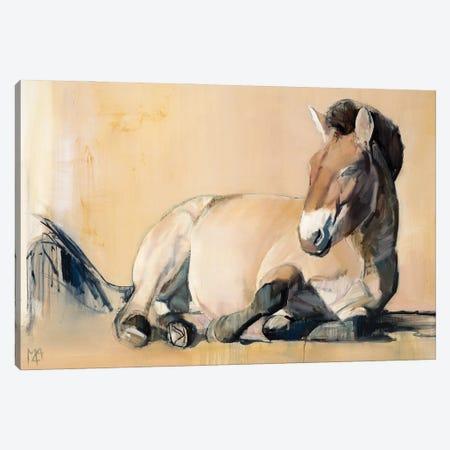 Plateau Sun (Przewalski's Horse), 2014 Canvas Print #MAD85} by Mark Adlington Canvas Artwork