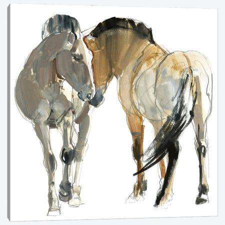Rencontre (Przewalski's Horse), 2013 Canvas Print #MAD86} by Mark Adlington Canvas Wall Art