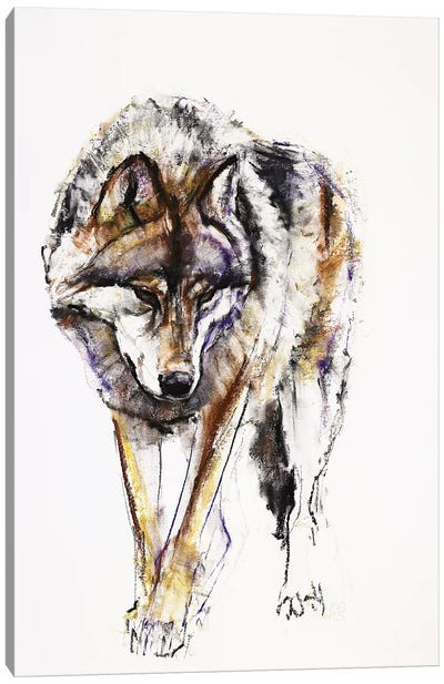 European Wolf Canvas Art Print