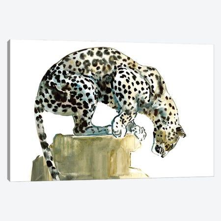 Spine (Arabian Leopard), 2015 Canvas Print #MAD91} by Mark Adlington Canvas Wall Art