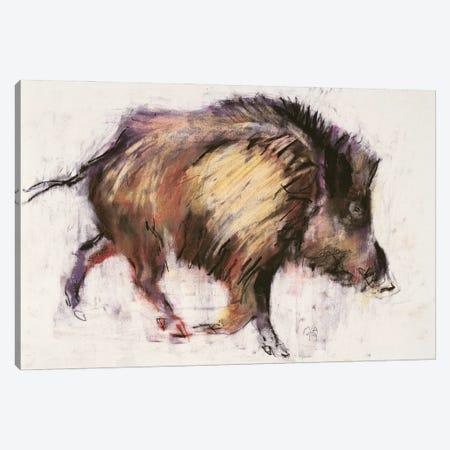 Wild Boar Trotting, 1999 Canvas Print #MAD98} by Mark Adlington Canvas Art