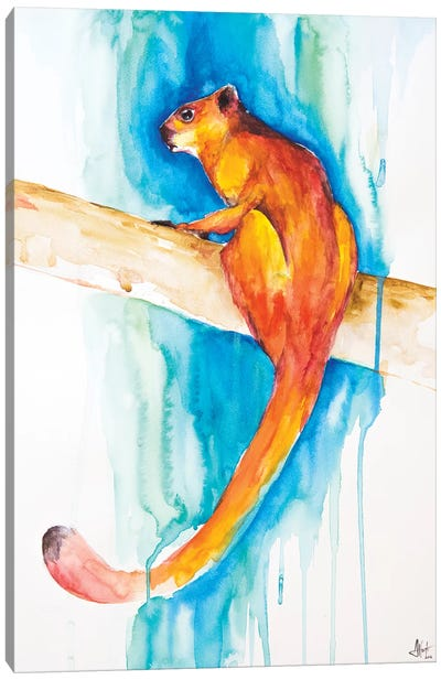 Giant Red Flying Squirrel Canvas Print #MAE79