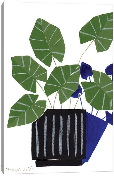 Abstract Plants XVI Canvas Art Print