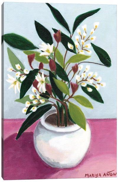 Flowers from Montserrat III Canvas Art Print