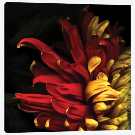 Y Viva Espana Canvas Print #MAG100} by Magda Indigo Canvas Art Print