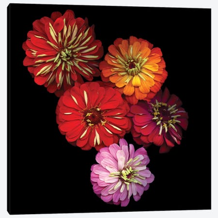Zinging Zinnia Canvas Print #MAG101} by Magda Indigo Canvas Print