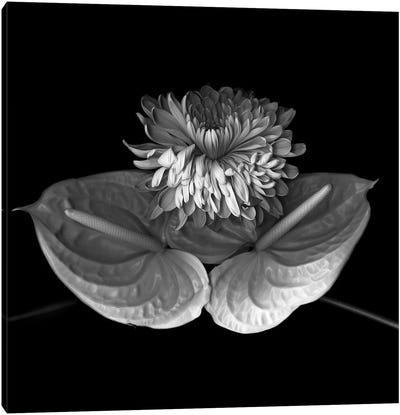 Anthurium XII, B&W Canvas Art Print
