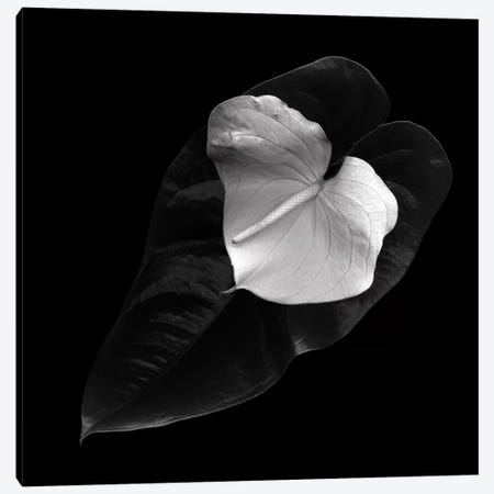 Anthurium, B&W Canvas Print #MAG111} by Magda Indigo Canvas Art