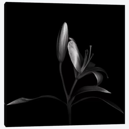 Autumn Lily III, B&W Canvas Print #MAG113} by Magda Indigo Canvas Wall Art