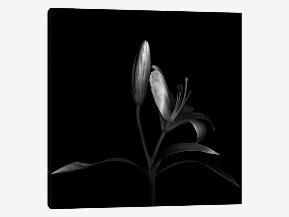 Autumn Lily III, B&W by Magda Indigo 1-piece Art Print