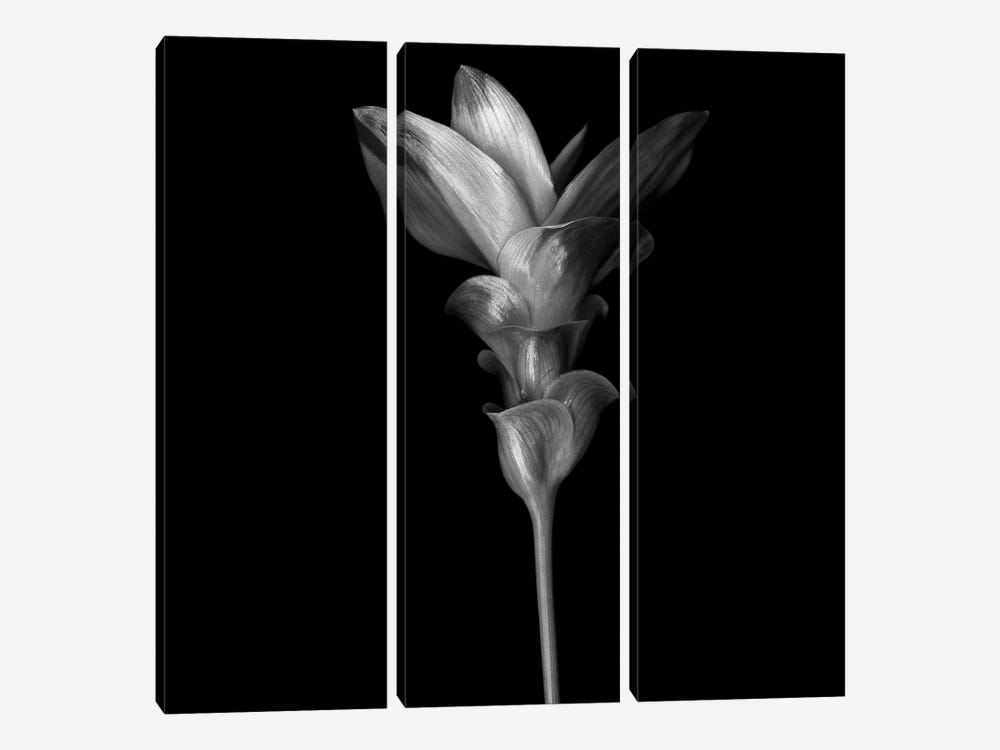 Curcuma III, B&W by Magda Indigo 3-piece Canvas Art