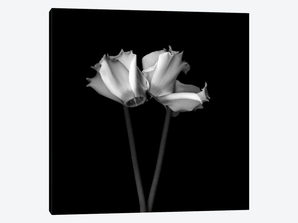 Cyclamen III, B&W by Magda Indigo 1-piece Art Print