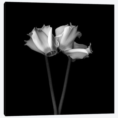 Cyclamen III, B&W 3-Piece Canvas #MAG119} by Magda Indigo Canvas Art