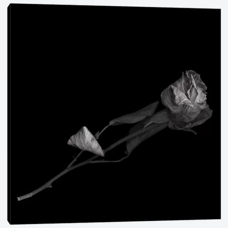 Dried Rose, B&W Canvas Print #MAG122} by Magda Indigo Art Print