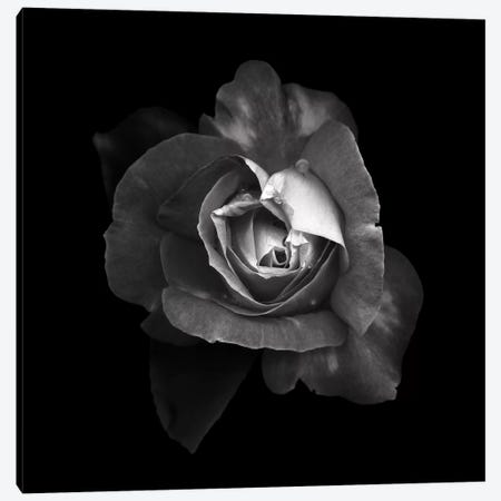 Duotone Rose I, B&W Canvas Print #MAG124} by Magda Indigo Canvas Wall Art