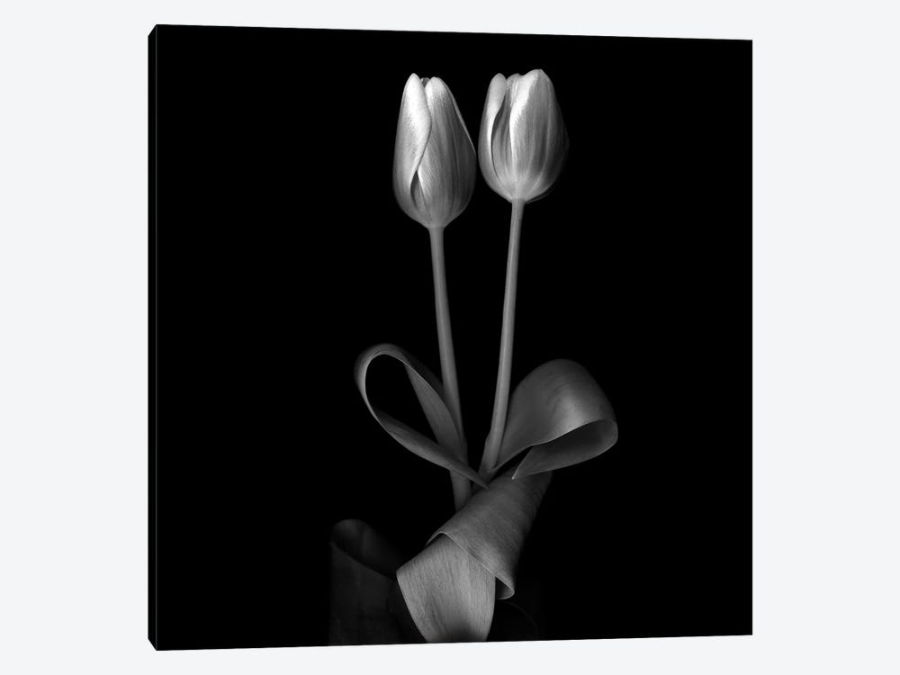 Duotone Tulips XI, B&W by Magda Indigo 1-piece Canvas Art