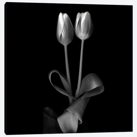 Duotone Tulips XI, B&W Canvas Print #MAG125} by Magda Indigo Canvas Artwork