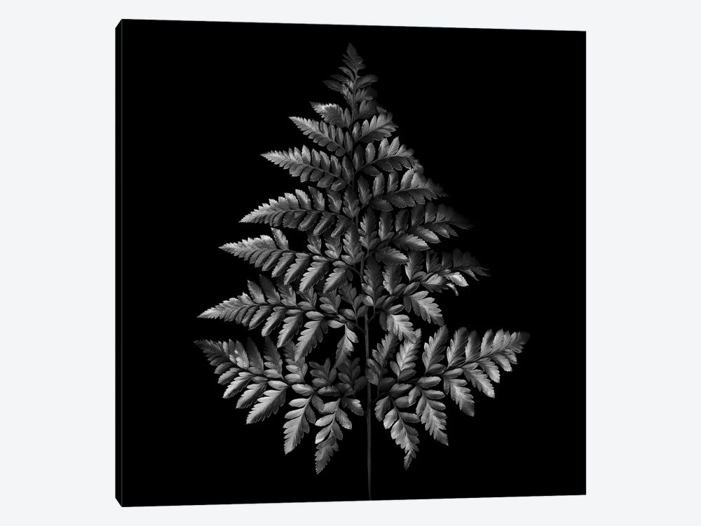 Fern Tree, B&W by Magda Indigo 1-piece Canvas Art