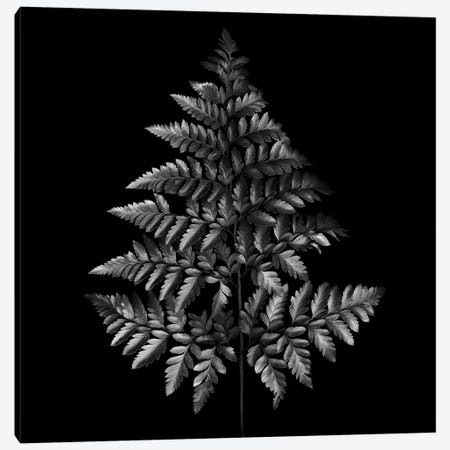 Fern Tree, B&W Canvas Print #MAG129} by Magda Indigo Canvas Print
