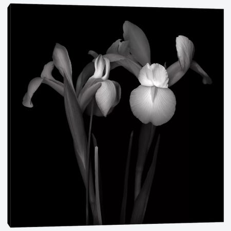 Iris IV, B&W Canvas Print #MAG133} by Magda Indigo Canvas Art